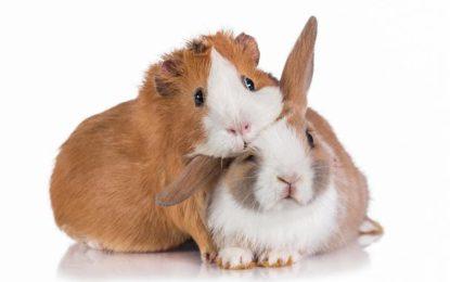 IMAP berät Lampe Privatinvest beim Verkauf der Bunny Tierernährung GmbH an Maxburg Capital Partners
