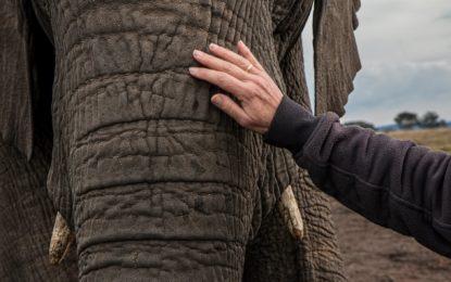 Dell Technologies fördert Artenschutz von Elefanten im südlichen Afrika