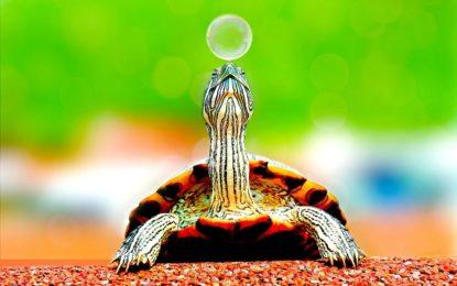 Am 23. Mai ist Weltschildkrötentag: Tipps für Haltung der kleinen Urzeittiere