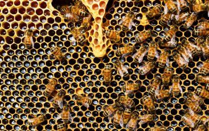 Was uns Bienen über unsere Arbeit lehren
