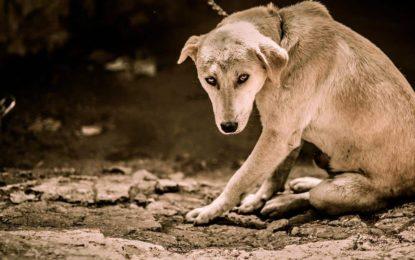 Hat Ihr Hund Suizidgedanken? Erkennen Sie Hundedepressionen frühzeitig!