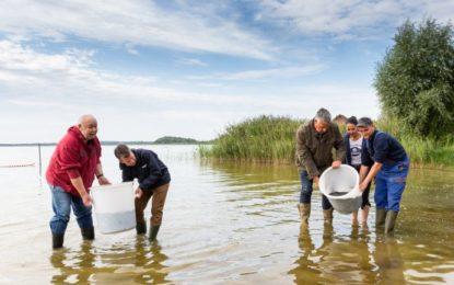 """WEMAG unterstützt Aktion des Landesanglerverbandes """"Rettet den europäischen Aal"""""""