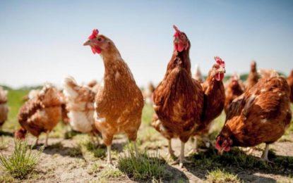 Nachhaltiges Angebot der WISAG Catering für mehr Tierwohl